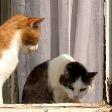 Соседка жалуется на запахи от животных которых мы разводим Что делать